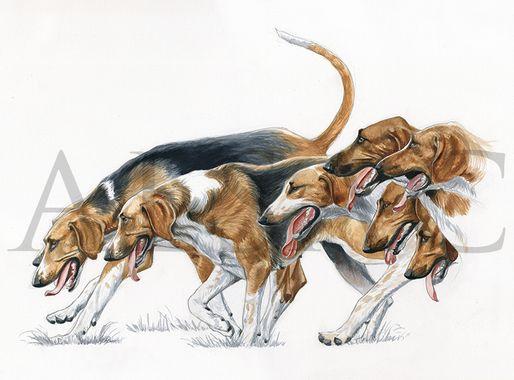bien-ameutés-aquarelle-chasse-courre-chiens